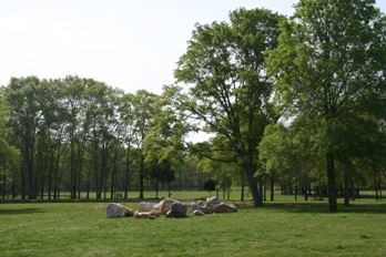 Trees in Veterans Park