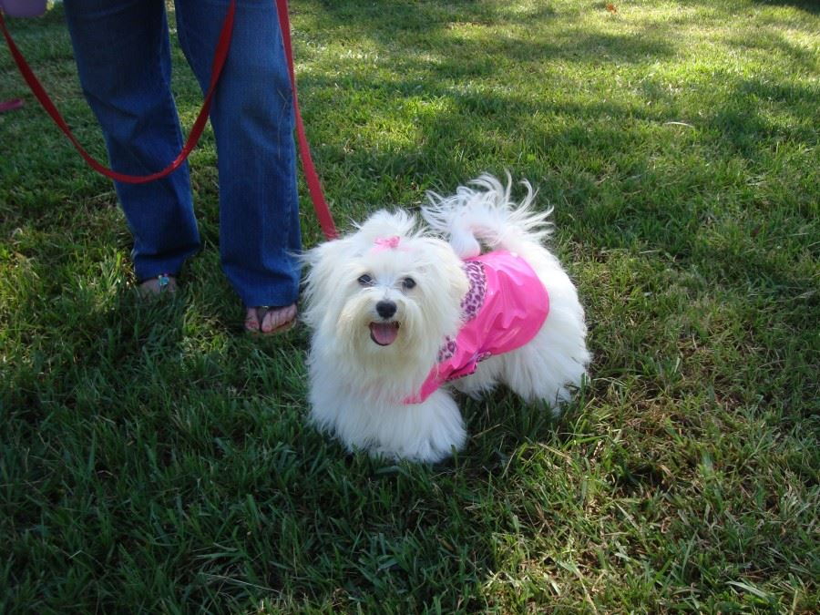 Bark in the Park 02