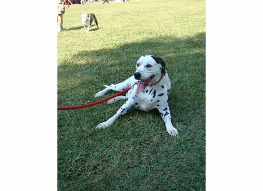 Bark in the Park 05