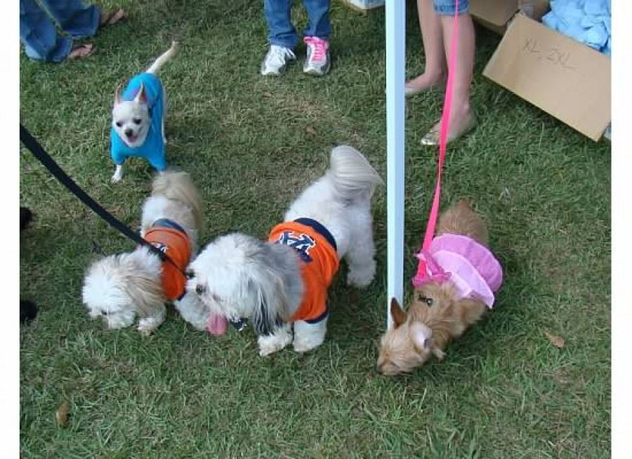 Bark in the Park 06